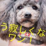 お出かけ中も安心。愛犬の様子はスマホで確認。働くママのブログ